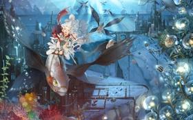 Картинка рыбы, город, Девочки, морские звезды