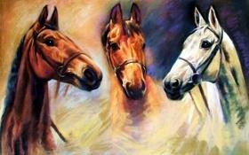 Обои животные, глаза, взгляд, живопись, три коня