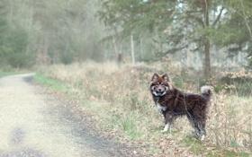Обои природа, дорога, собака