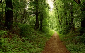 Обои лес, дорога, лето