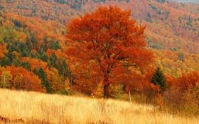 Обои осень, лес, дерево