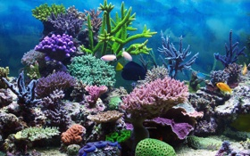 Обои подводный мир, underwater, ocean, fishes, tropical, reef, coral