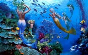 Обои рыбы, подводный мир, русалки, Wil Cormier