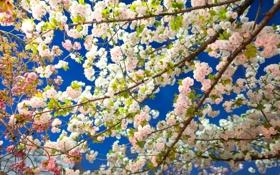 Обои небо, деревья, ветки, весна, сад