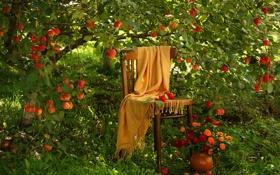 Обои природа, травы, яблоки, дерево