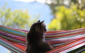 Обои кошка, гамак, серая, блики. фон