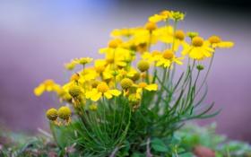 Обои поле, природа, растение, лепестки, сад, луг