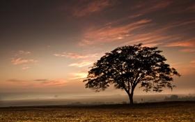 Обои поле, небо, закат, дерево