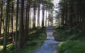 Обои лес, деревья, парк, дорожка, норвегия, norway