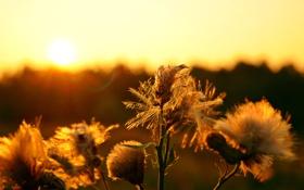 Обои поле, лес, небо, солнце, Цветы