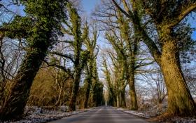 Картинка природа, снег, небо, деревья, дорога