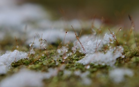 Обои макро, ростки, капельки, лёд, тающий