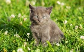Обои котенок, grass, травка, цветочки, kitten, flowers