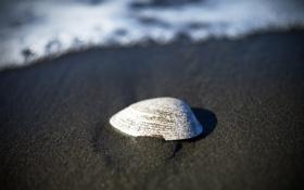 Картинка белая, песчинки, вода, море, песок, пляж, берег