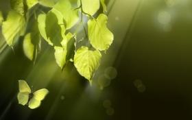 Обои листья, бабочка, ветка