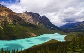 Обои лес, деревья, горы, озеро, панорама, Alberta, Canada