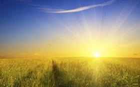 Обои поле, солнце, природа, фото, обои, пейзажи