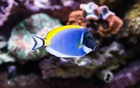 Обои аквариум, рыбка, подводный мир, под водой, пестрая