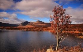 Картинка осень, озеро, дерево, холмы