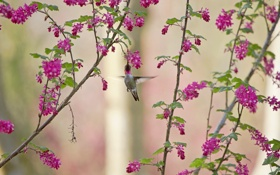 Картинка цветы, ветки, колибри, птичка
