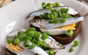 Обои яйцо, рыба, лук, бутерброд, анчоус