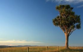 Картинка небо, столбы, трава, забор, дерево