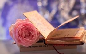 Обои цветок, макро, розовая, роза, книжка