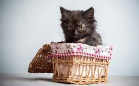 Картинка черныш, котенок, корзинка