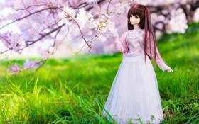 Обои весна, grass, травка, spring, куколка, цветущие деревья, doll