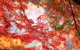 Картинка осень, листья, ветки, природа, времена года, листва, желтые
