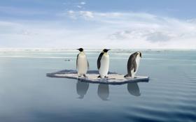 Картинка Пингвины, Путешествие, На льдине
