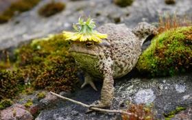 Картинка природа, юмор, жаба