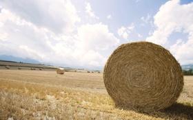 Картинка пейзаж, горизонт, сено, Field, стог, поле, expanse