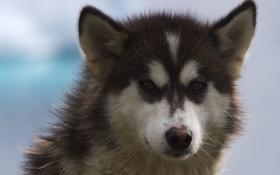 Картинка морда, друг, собака, пёс