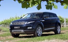 Обои листья, синий, Land Rover, кусты, range rover, передок, кроссовер
