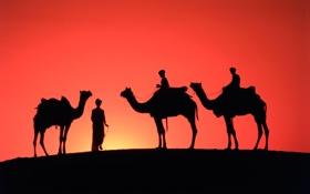 Картинка небо, закат, пустыня, горизонт, силуэт, зарево, верблюды