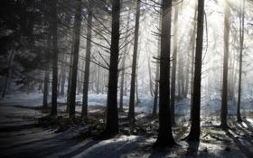 Картинка зима, лес, деревья, природа