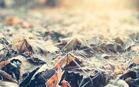 Картинка иней, осень, листья, солнце, макро, лучи, свет