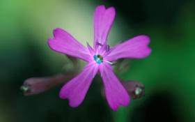 Обои цветок, природа, краски, растение, лепестки