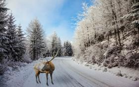 Обои лес, поворот, рога, фотошоп, олень, деревья, дорога