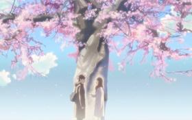 Обои аниме, сакура, 5 сантиметров в секунду