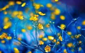 Картинка цветы, растение, лепестки, стебель