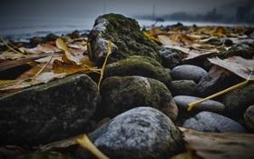 Картинка осень, листья, камни, мох, желтые, булыжники