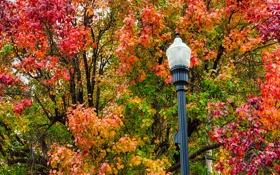Обои осень, листья, деревья, ветки, природа, фонарь