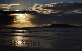 Картинка море, пейзаж, птицы, ночь