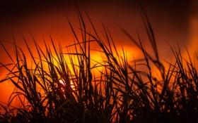 Обои трава, солнце, закат, силуэт