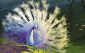 Обои павлин, белый, птица, природа, арт, хвост, перья