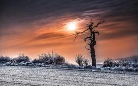 Картинка закат, облака, небо, зима, поле, дерево