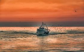 Обои море, небо, птицы, корабль, катер, зарево