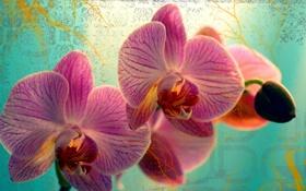 Обои макро, цветок, бутон, flowers, цветы